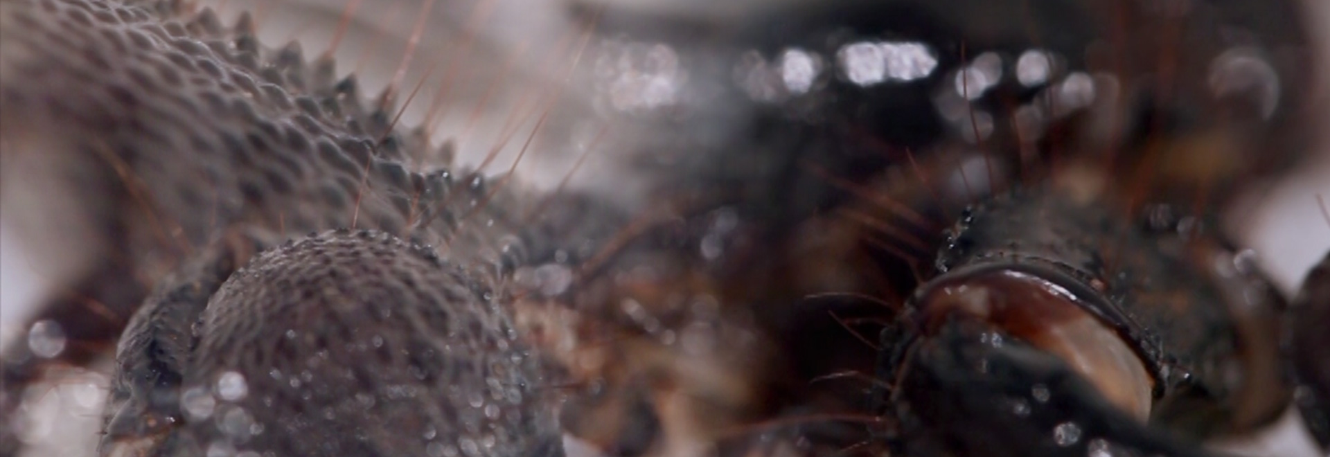 js-filmproduction-postproduction-viral-scorpion-header